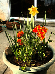 20090401 Spring Bulbs