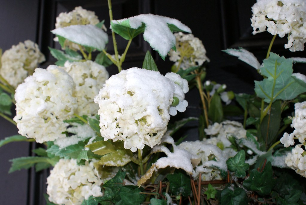 Snow Flowers in Spring