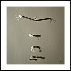 /... (Julian E...) Tags: reflection water monochrome flock flight evolution bamboo zen balance progression sheared equal