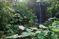 Jungle in Burgers Bush (Foto Martien (thanks for over 2.000.000 views)) Tags: holland netherlands dutch zoo waterfall arnhem nederland indoor burgers jungle veluwe burgerszoo ecosystem immersion burgersbush gelderland dierenpark waterval tropicalrainforest burgersdierenpark sonyalpha350 tropischregenwoud martienuiterweerd carlzeisssony1680 expressyourselfaward tropischehal tropichall