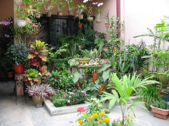 August 2006 in our frontyard garden. Can you spot the Tricolor Dracaena next to the pillar, standing tall?