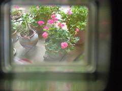 DSCN6919_2389_edited-2.jpg