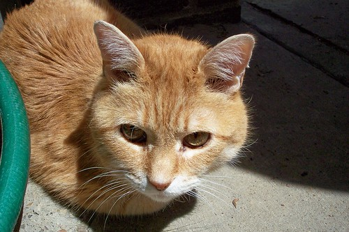 sunny Tiger