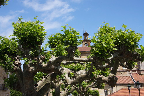 Cool Tree with Steeple
