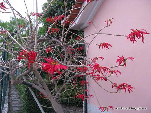 strange flower tree