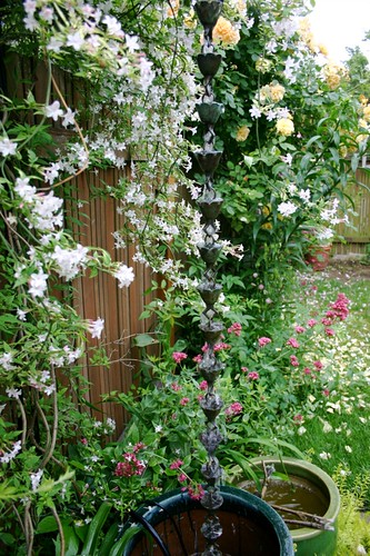 The Wall of Scent: jasmine and roses