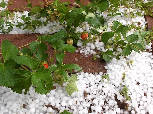 aw hail!