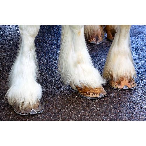 Herts Heavy Horse Show