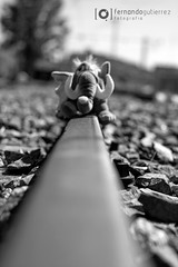 elephant walking on train routes (rboot_rboot) Tags: blackandwhite elephant experiment robcarrmethod