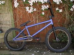 Brandons bmx. (Braaandon.) Tags: bike bmx brandon dk barry co fit proper fedral odyessy