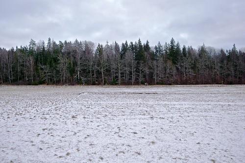 2009-01-10: Fjällnora