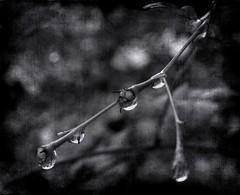Fragile (Cinzia A. Rizzo / fataetoile) Tags: texture drops myson 18 fragile compleanno stefano themoulinrouge fpg explore268 infinestyle fataetoile cinziarizzo
