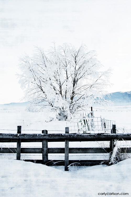 frostbiteweb
