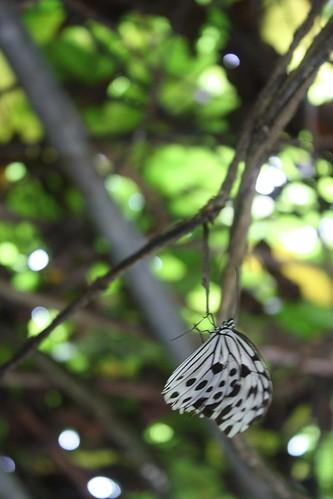 Butterfly Park Trip 2009