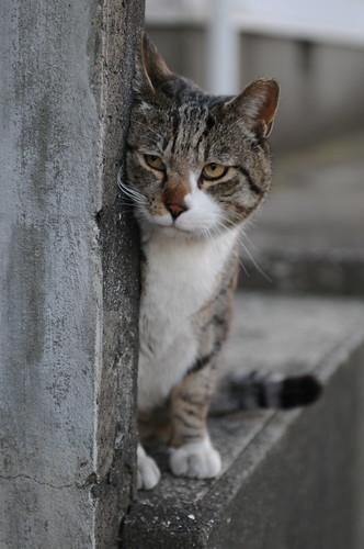 フリー画像| 動物写真| 哺乳類| ネコ科| 猫/ネコ| 覗く/見る|      フリー素材|