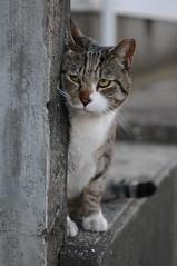 [フリー画像] [動物写真] [哺乳類] [ネコ科] [猫/ネコ] [覗く/見る]      [フリー素材]