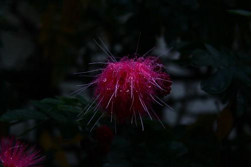Tree urchin