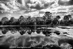 Wetland Reflections (www.LKGPhoto.com) Tags: bw white black reflection nature print landscape explore wetlands 5for2 greencay explorewinnersoftheworld wwwlkgphotocom