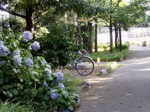 水神社、紫陽花の小径。