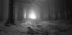 Light through the fog (Sidaho) Tags: uk trees england blackandwhite bw mist misty fog forest landscape europe foggy lancashire lordoftherings hobbit beaconfell fangorn mirkwood eos450d tripleniceshot flickraward5 flickrawardgallery