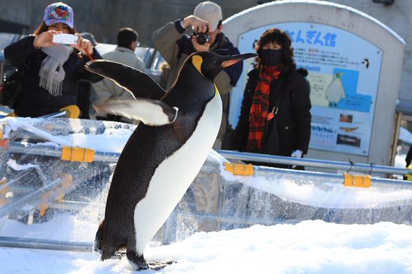2009北海道-D5-3-旭山動物園_35.jpg