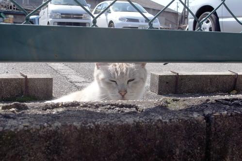 Today's Cat@20090308