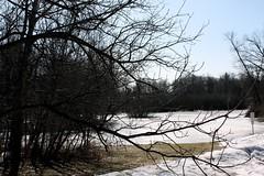 frozen pond (creatorxs) Tags: lake nature frozenlake