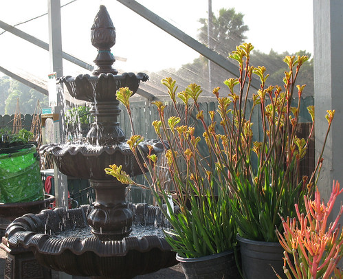 kangaroo paws, water wise plants, outdoor fountain with re-circulating water pump