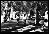 Camouflage (Hamilton-Roberts Photography) Tags: park trees cambridge bw art blackwhite cycle creativephotographers hamiltonrobertsphotography