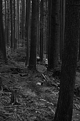 MTB on Fromme (conorcoen) Tags: mountain bike vancouver jump mountainbike trail shore northshore mtb transition fromme