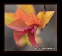 New Life... (Blue-Sky Pink) Tags: new macro leaves spring shrub 1001nights d300 60mmmicro topshots natureselegantshots imagesbytakache
