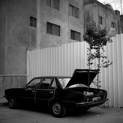Car Park (Bert Pot) Tags: travel bw tree 6x6 tlr film car analog rolleiflex zeiss blackwhite parkinglot kodak surrealism amman bert jordan pot trunk carpark f28 reportage negativ planar jordania 80mm zeissplanar80mmf28 surreel bertpot masterpiecesofphotography zeissplanar80f28