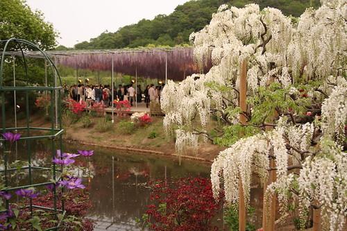 Ashikaga Flower Park 03