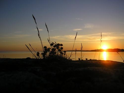 En vacker bild i solnedgången.