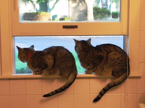 window_cats3