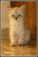 Belinha beb. (GilbertoMPalma) Tags: animal cat gato felino duetos gilbertompalma gilbertopalma