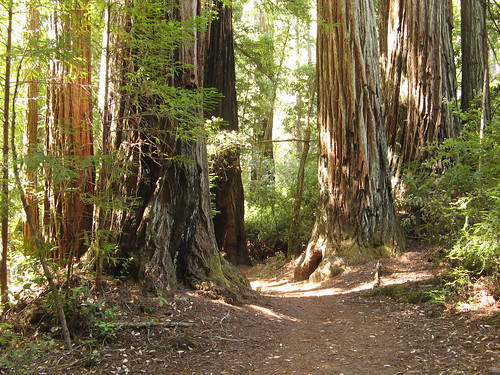 Bay Area Redwood Hikes