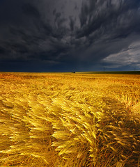They say, that you shouldn't be out on a plain field during a thunderstorm... (Philipp Klinger Photography) Tags: trip travel blue light sunset summer vacation sky cloud sun storm color colour art luz nature field grass barley june yellow clouds germany dark landscape geotagged deutschland gold grey golden spring corn nikon colorful europa europe hessen lumire ominous wheat gray grain cereal may sigma atmosphere thunderstorm colourful fx philipp sigma1224mm thunder hesse badnauheim klinger d700 bratanesque frhwofavs dcdead vanagram wisselsheim
