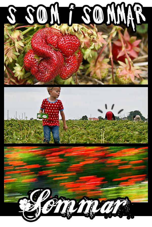 röd-sommar