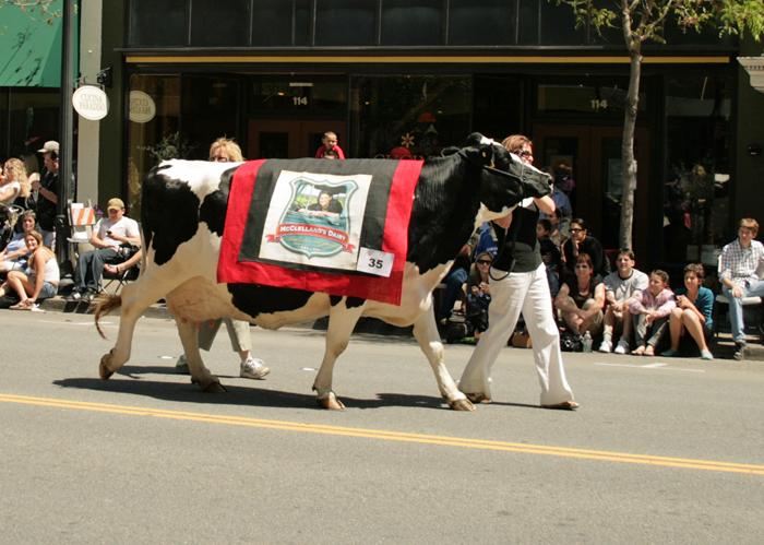 Gihugic Cow