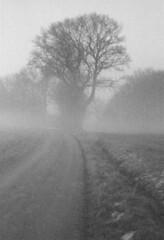 foggy treeism #6 (mikeasaurus) Tags: winter blackandwhite tree film nature monochrome fog bayern bavaria evening twilight nebel kodak sw ricoh baum zone 2007 3200asa differentpointofview stauden autaut december2007 kr10x