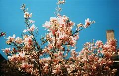 Flowers_AK002 (Hefei Bear) Tags: flowers ak