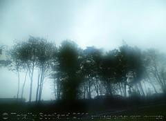 Storm bound trees