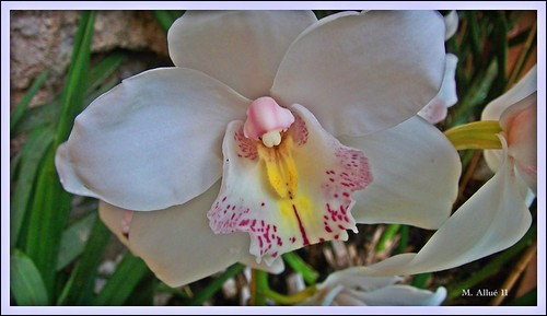 Orquídea by Miguel Allué Aguilar