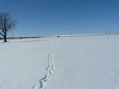 On the way back from owl sighting. (willambera) Tags: bird lumix raptor prey snowyowl fz18 wintermigration