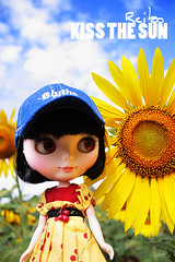 Sunflower with Sunkiss