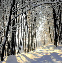 Winter in Lithuania. (limajulija) Tags: world trees winter sunlight snow nature forest breathtaking lithuania gmt lietuva naturesfinest otw greatphotographers theworldwelivein prienai zarafa mywinners theloveshack flickraward flickrestrellas quarzoespecial rubyphotographer flickrhivemind breathtakinggoldaward 100commentgroup janinaleo naturescreations dragondaggeraward limajulija superstarthebest yourwonderland