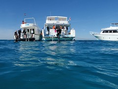 Marsa Abu Kalawa Reef (flip_lmb) Tags: egypt scuba diving el gouna elgouna