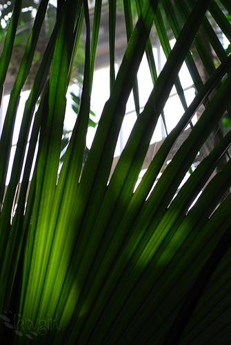 ABG_leafy_green[2009]