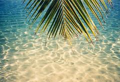 polynesia 2001 (UbiMaXx) Tags: 2001 mer film beach water french polynesia interesting sand eau sable lagoon scan tahiti plage bora maxx borabora moorea lagon polynésiefrançaise polynesie ubimaxx